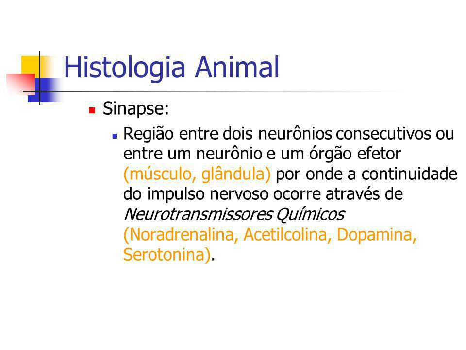 Histologia Animal Sinapse: