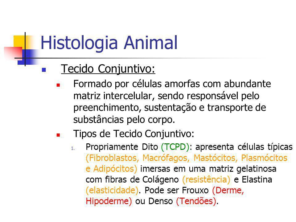 Histologia Animal Tecido Conjuntivo: