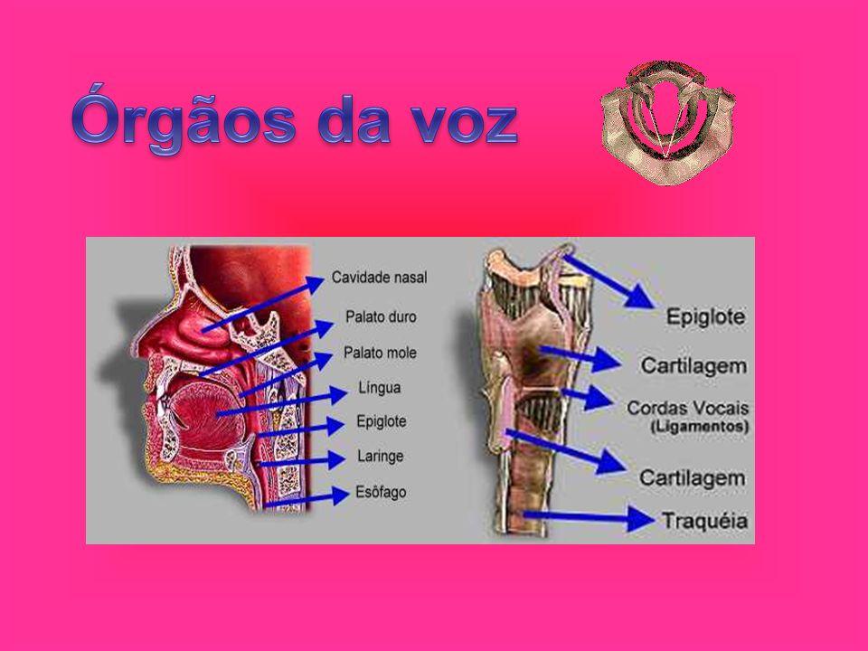 Órgãos da voz