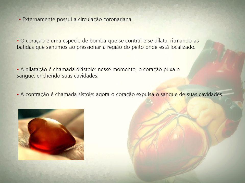 • Externamente possui a circulação coronariana.