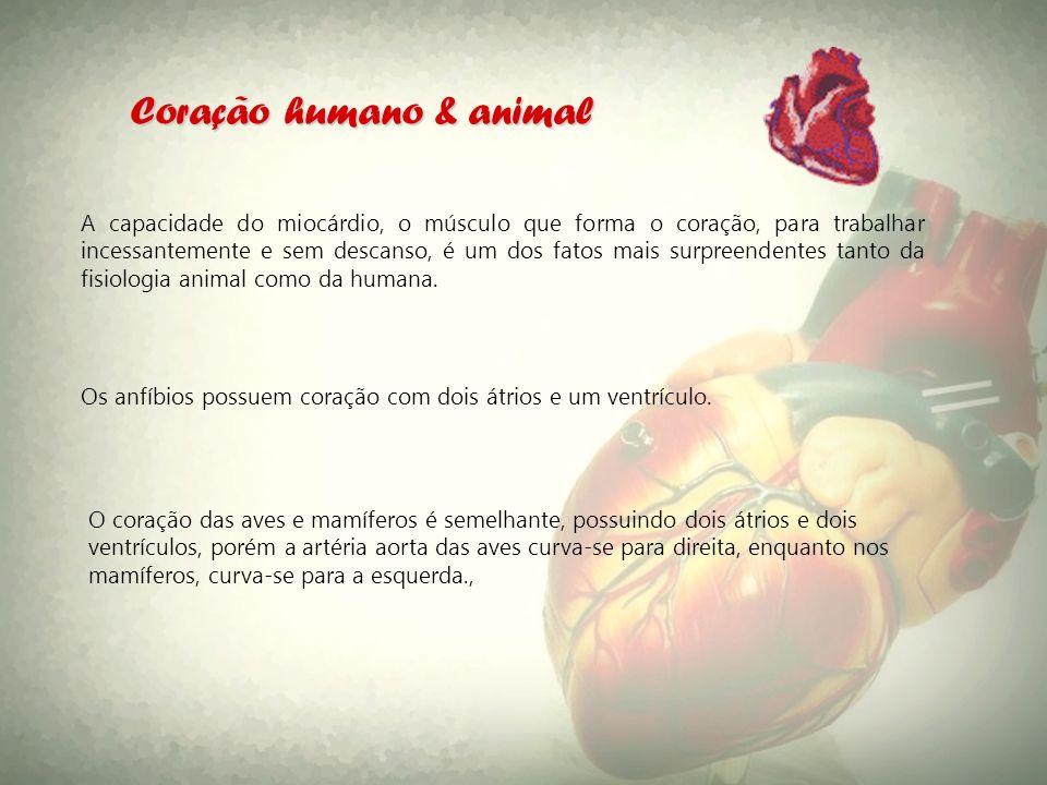 Coração humano & animal