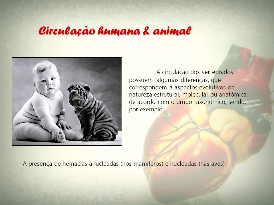 Circulação humana & animal