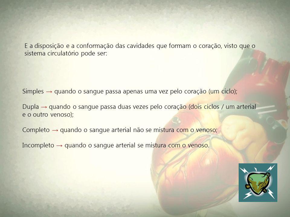 E a disposição e a conformação das cavidades que formam o coração, visto que o sistema circulatório pode ser:
