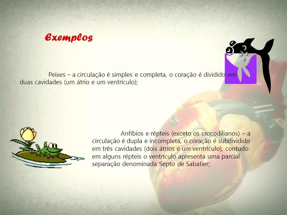 Exemplos Peixes – a circulação é simples e completa, o coração é dividido em duas cavidades (um átrio e um ventrículo);