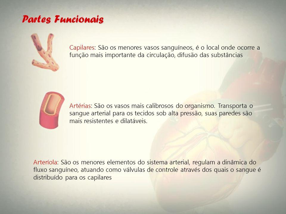 Partes Funcionais Capilares: São os menores vasos sanguíneos, é o local onde ocorre a função mais importante da circulação, difusão das substâncias.