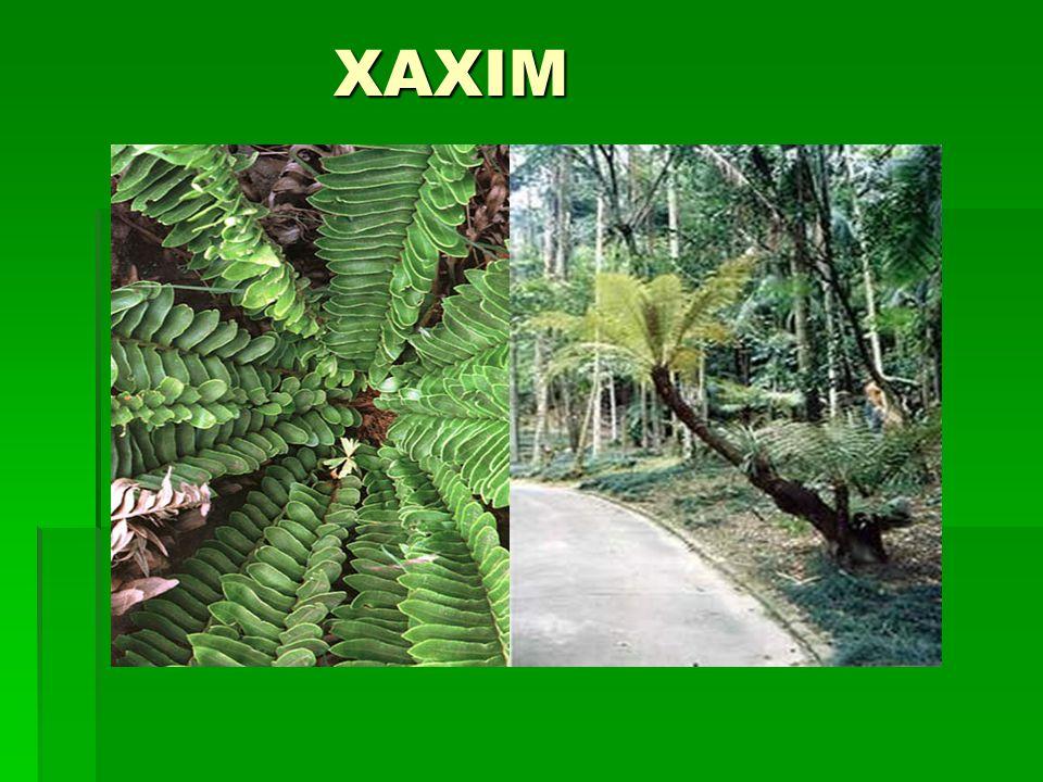 XAXIM