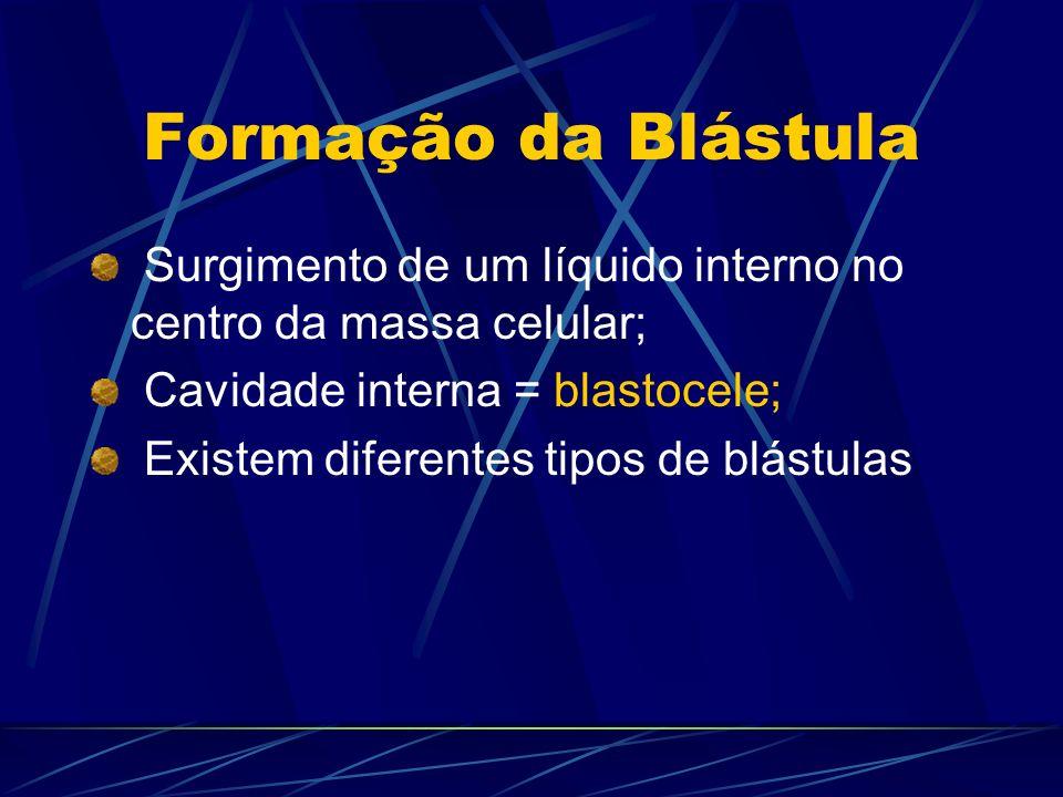 Formação da Blástula Surgimento de um líquido interno no centro da massa celular; Cavidade interna = blastocele;