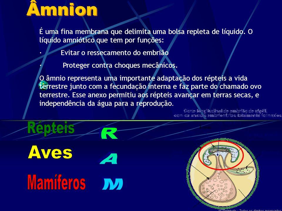 Âmnion Répteis RAM Aves Mamíferos