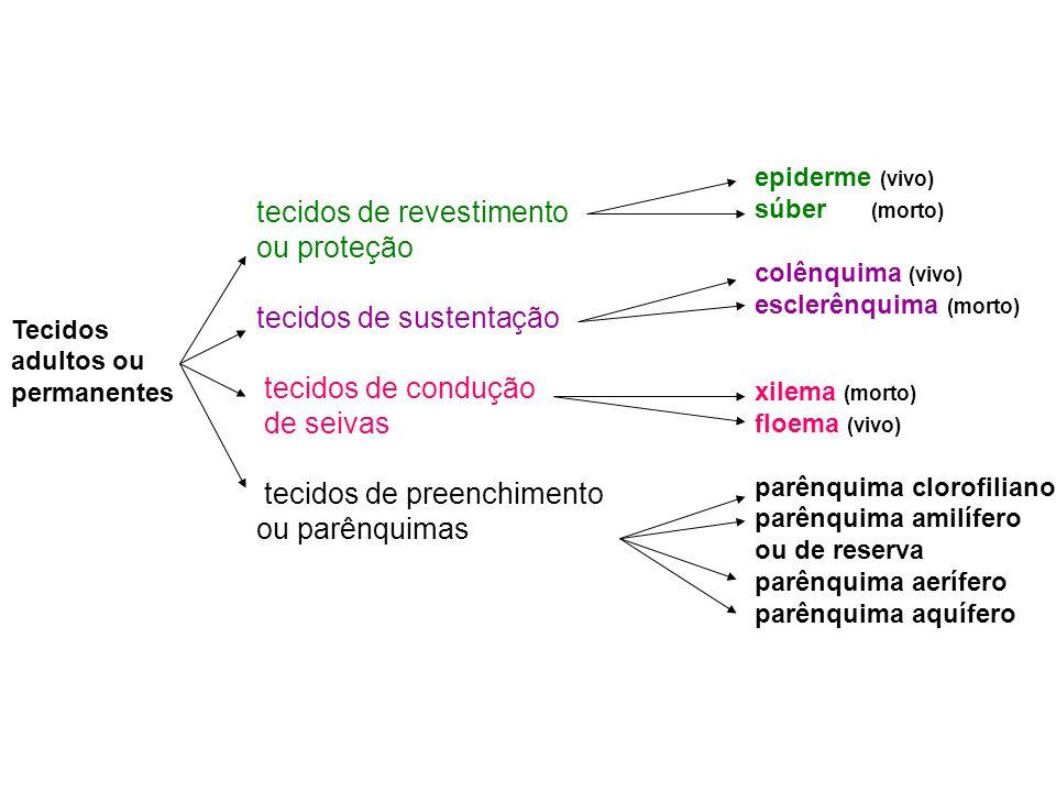 tecidos de revestimento ou proteção tecidos de sustentação
