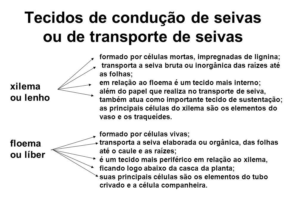 Tecidos de condução de seivas ou de transporte de seivas