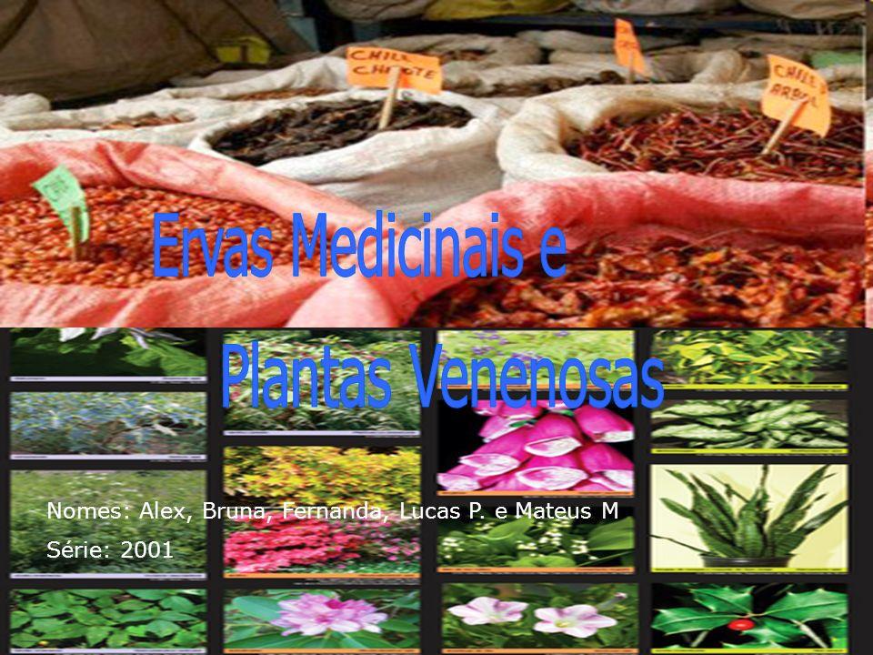 Ervas Medicinais e Plantas Venenosas