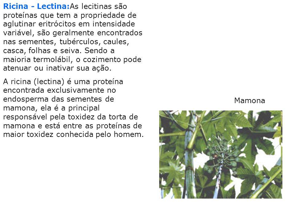 Ricina - Lectina:As lecitinas são proteínas que tem a propriedade de aglutinar eritrócitos em intensidade variável, são geralmente encontrados nas sementes, tubérculos, caules, casca, folhas e seiva. Sendo a maioria termolábil, o cozimento pode atenuar ou inativar sua ação.