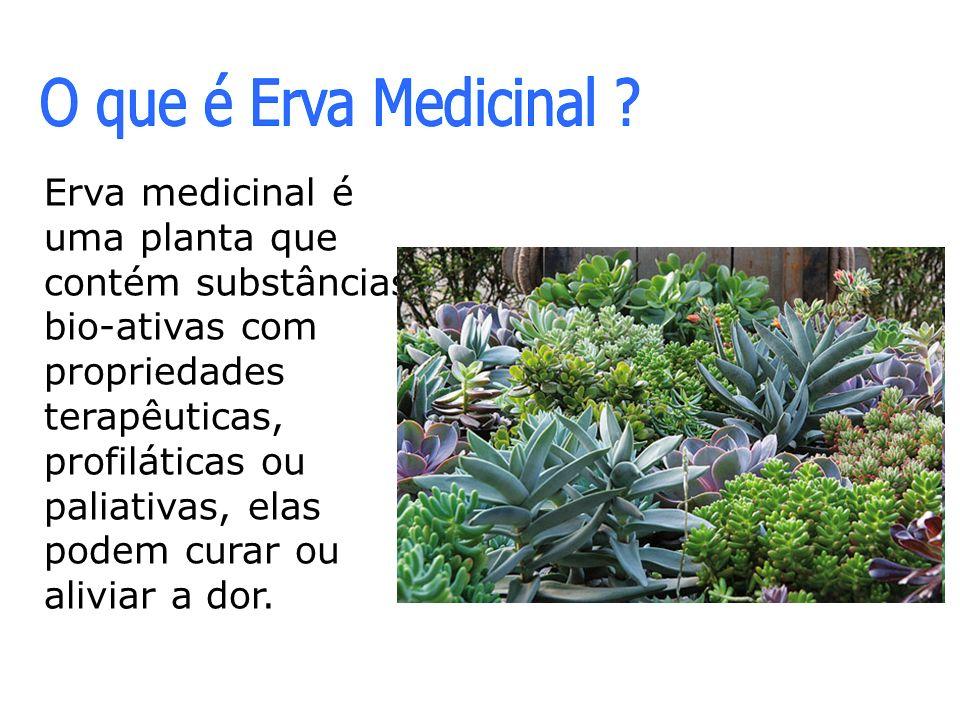 O que é Erva Medicinal