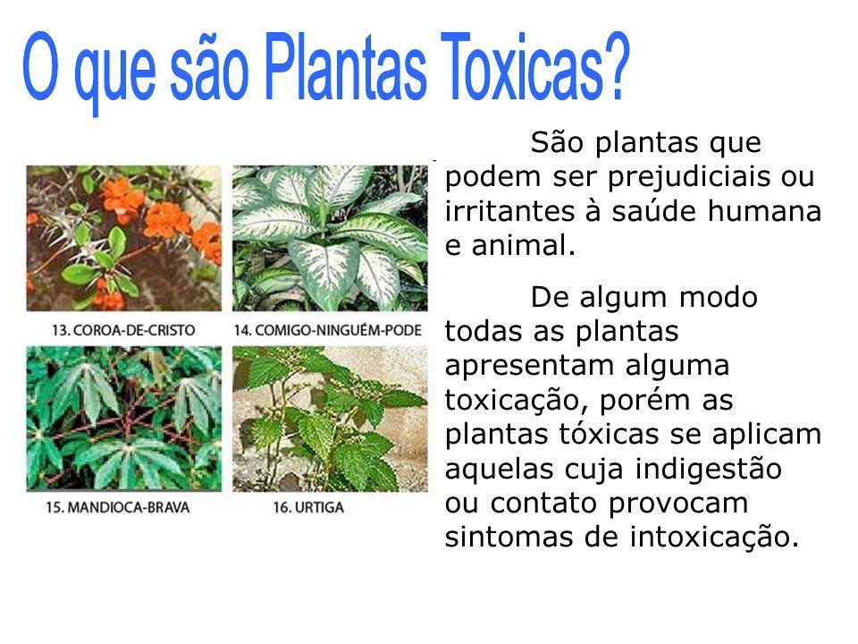 O que são Plantas Toxicas