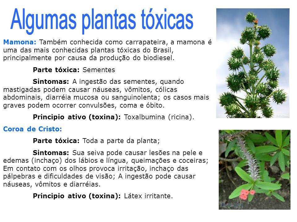 Algumas plantas tóxicas