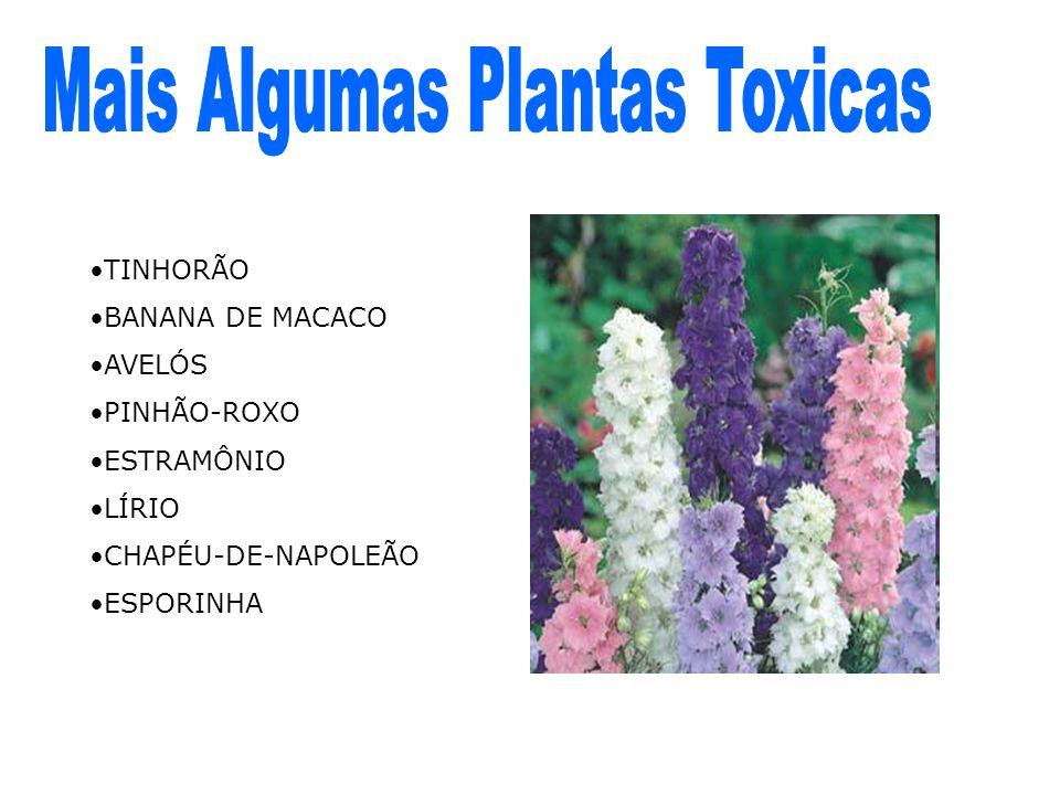 Mais Algumas Plantas Toxicas