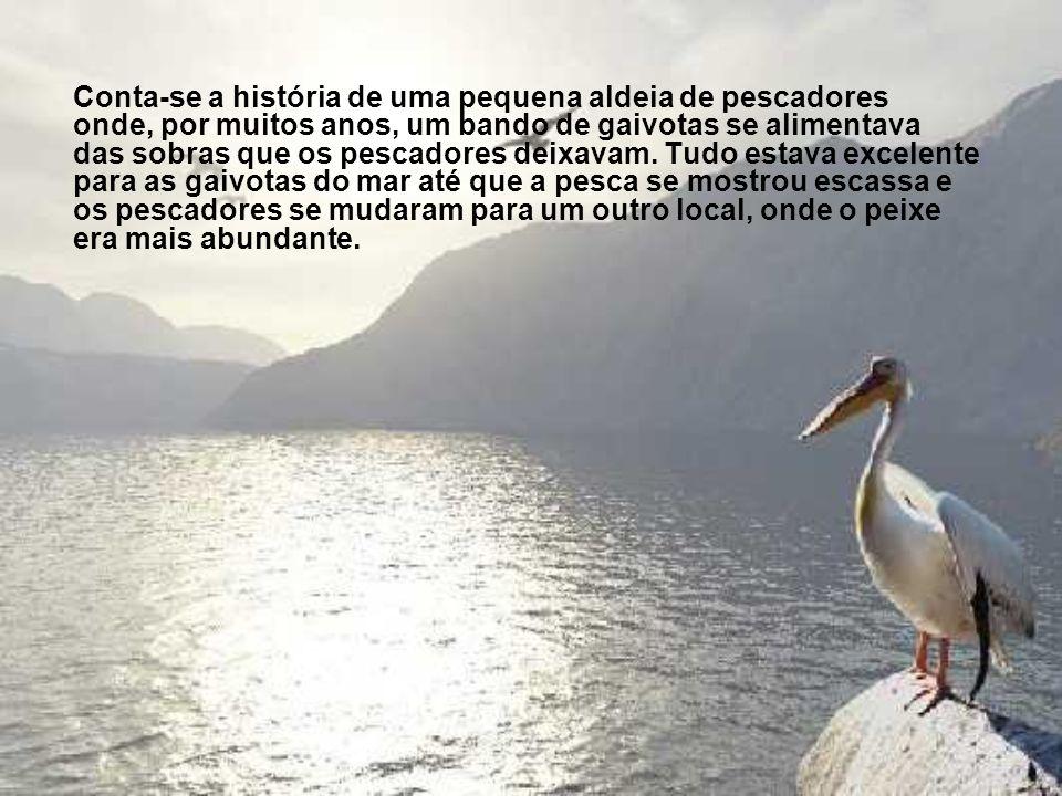 Conta-se a história de uma pequena aldeia de pescadores onde, por muitos anos, um bando de gaivotas se alimentava das sobras que os pescadores deixavam.
