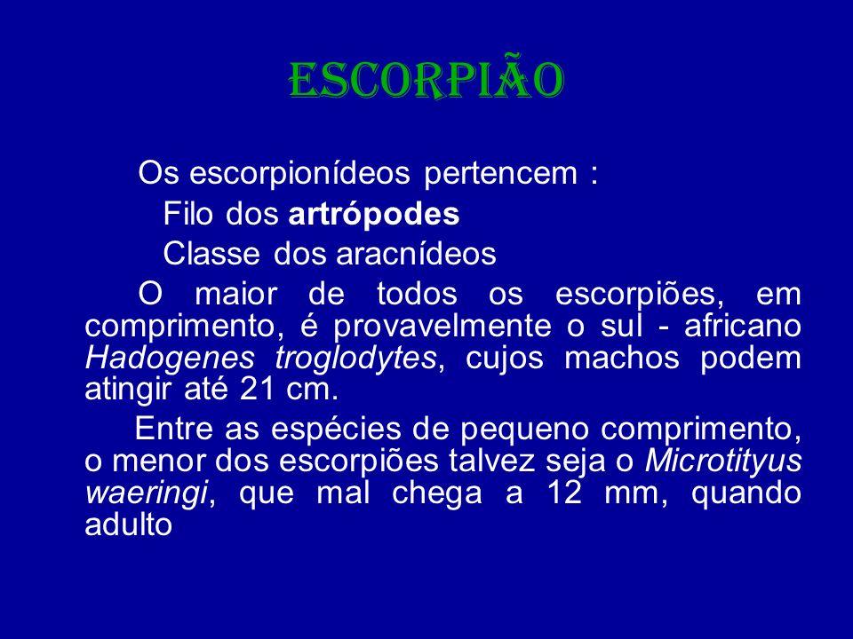 ESCORPIÃO Os escorpionídeos pertencem : Filo dos artrópodes
