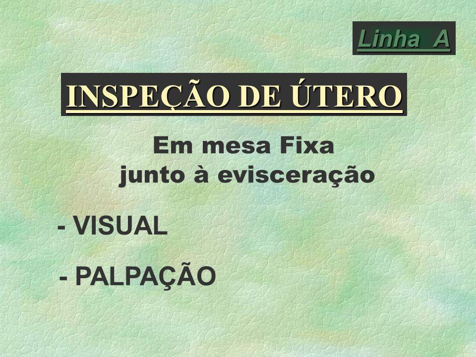 INSPEÇÃO DE ÚTERO - VISUAL - PALPAÇÃO Linha A Em mesa Fixa