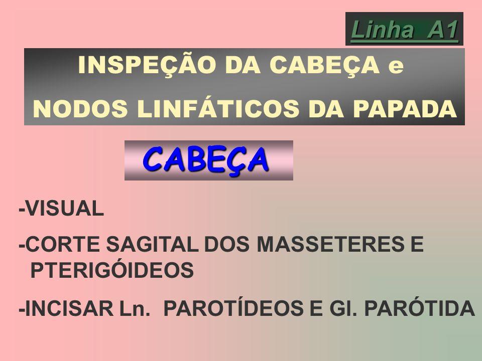 NODOS LINFÁTICOS DA PAPADA