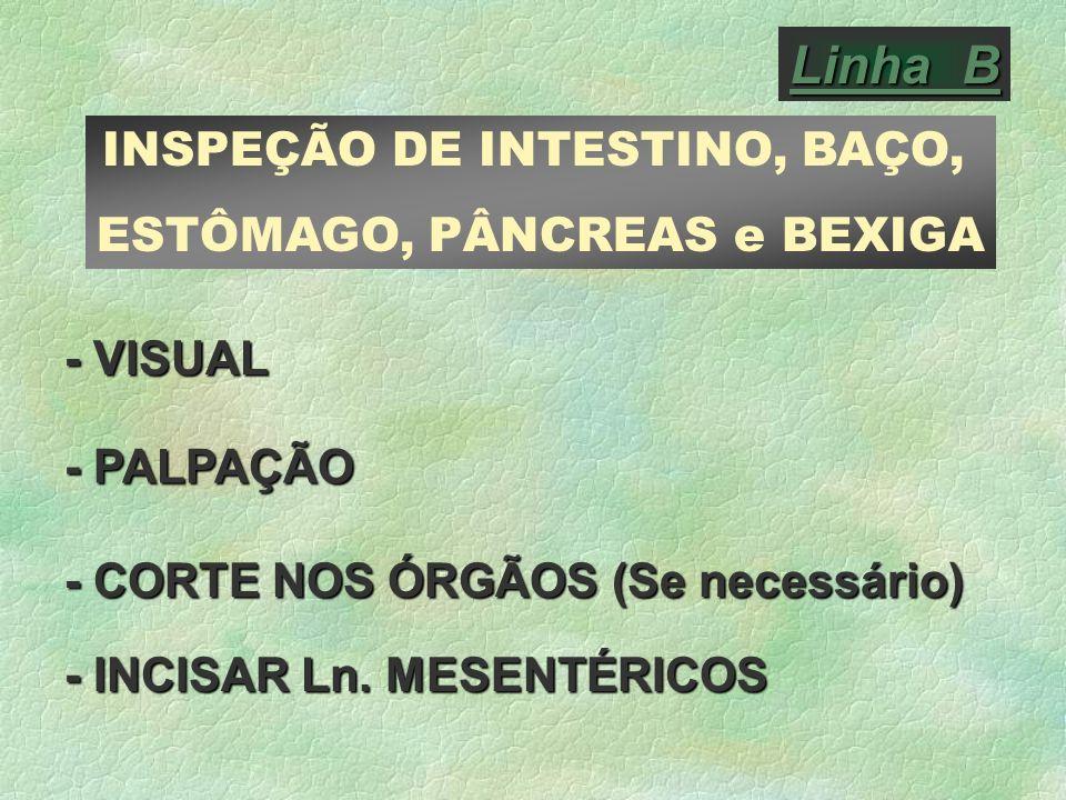Linha B INSPEÇÃO DE INTESTINO, BAÇO, ESTÔMAGO, PÂNCREAS e BEXIGA
