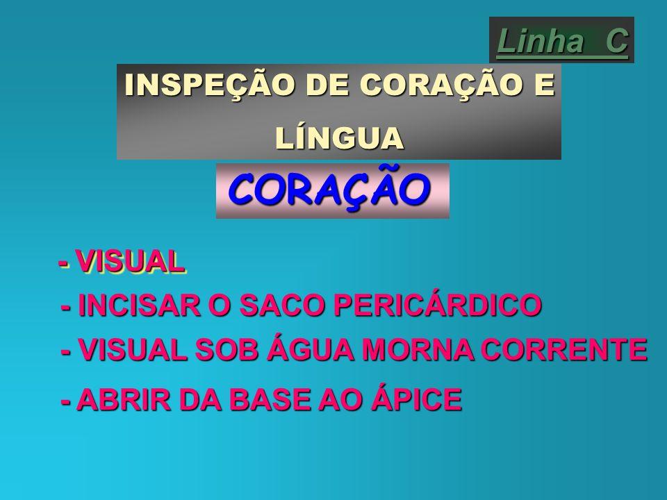 CORAÇÃO Linha C INSPEÇÃO DE CORAÇÃO E LÍNGUA - VISUAL