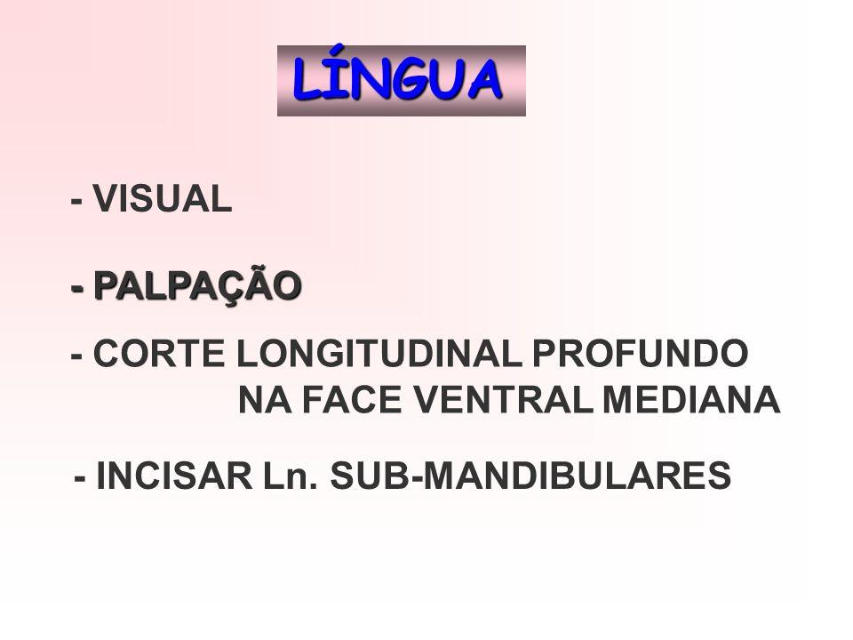 LÍNGUA - VISUAL - PALPAÇÃO - CORTE LONGITUDINAL PROFUNDO