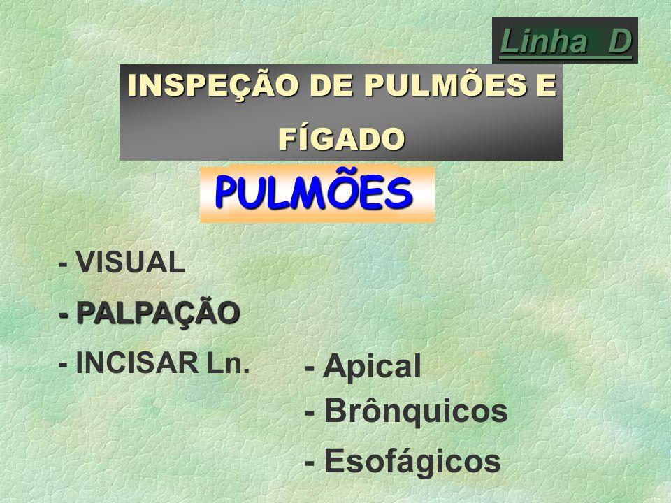 PULMÕES Linha D - Apical - Brônquicos - Esofágicos