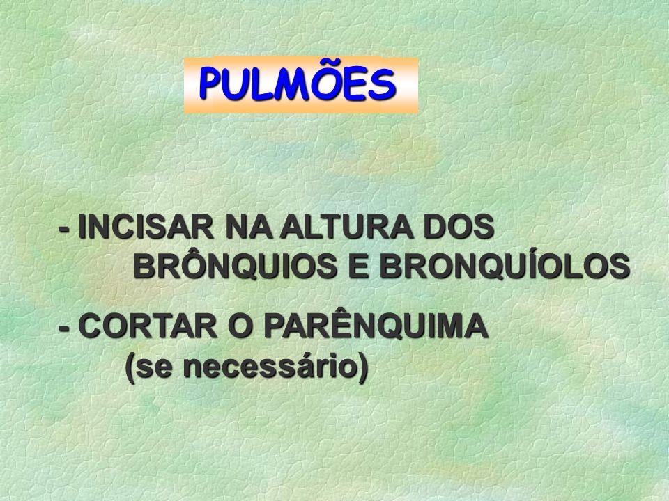 PULMÕES - INCISAR NA ALTURA DOS BRÔNQUIOS E BRONQUÍOLOS