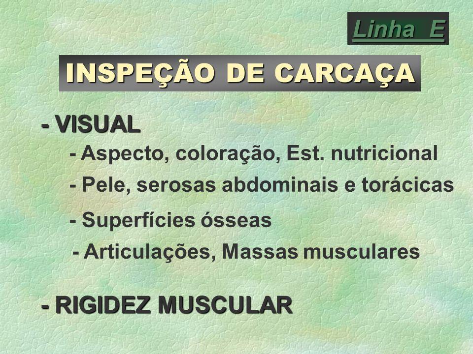 INSPEÇÃO DE CARCAÇA Linha E - VISUAL - RIGIDEZ MUSCULAR