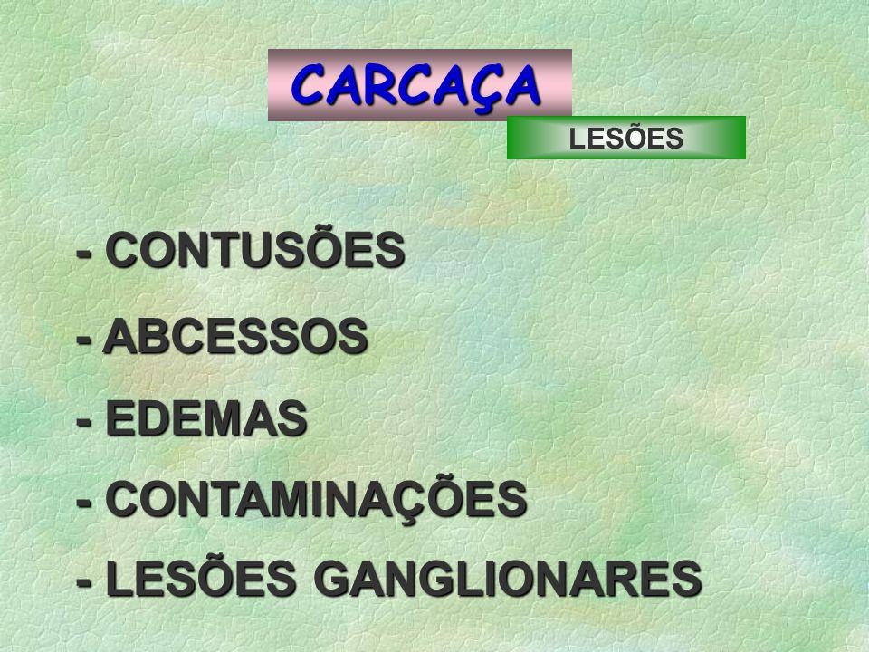 CARCAÇA - CONTUSÕES - ABCESSOS - EDEMAS - CONTAMINAÇÕES