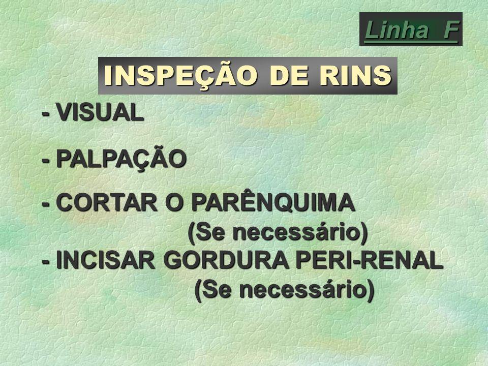 INSPEÇÃO DE RINS Linha F - VISUAL - PALPAÇÃO - CORTAR O PARÊNQUIMA