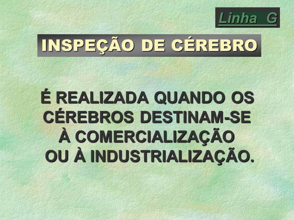 INSPEÇÃO DE CÉREBRO É REALIZADA QUANDO OS CÉREBROS DESTINAM-SE