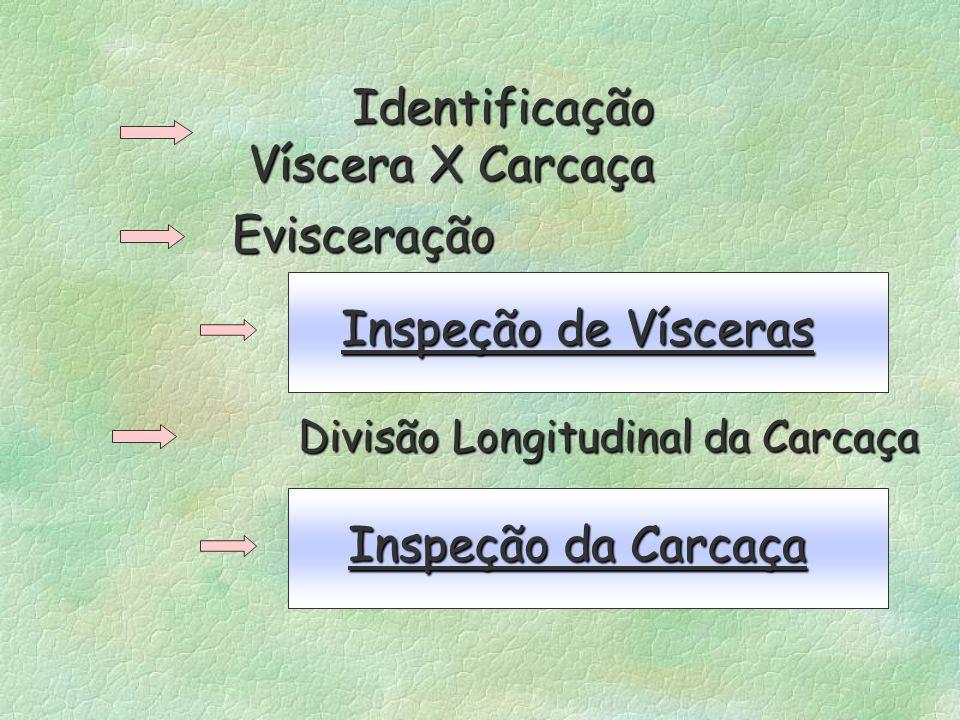 Identificação Víscera X Carcaça. Evisceração. Inspeção de Vísceras. Divisão Longitudinal da Carcaça.