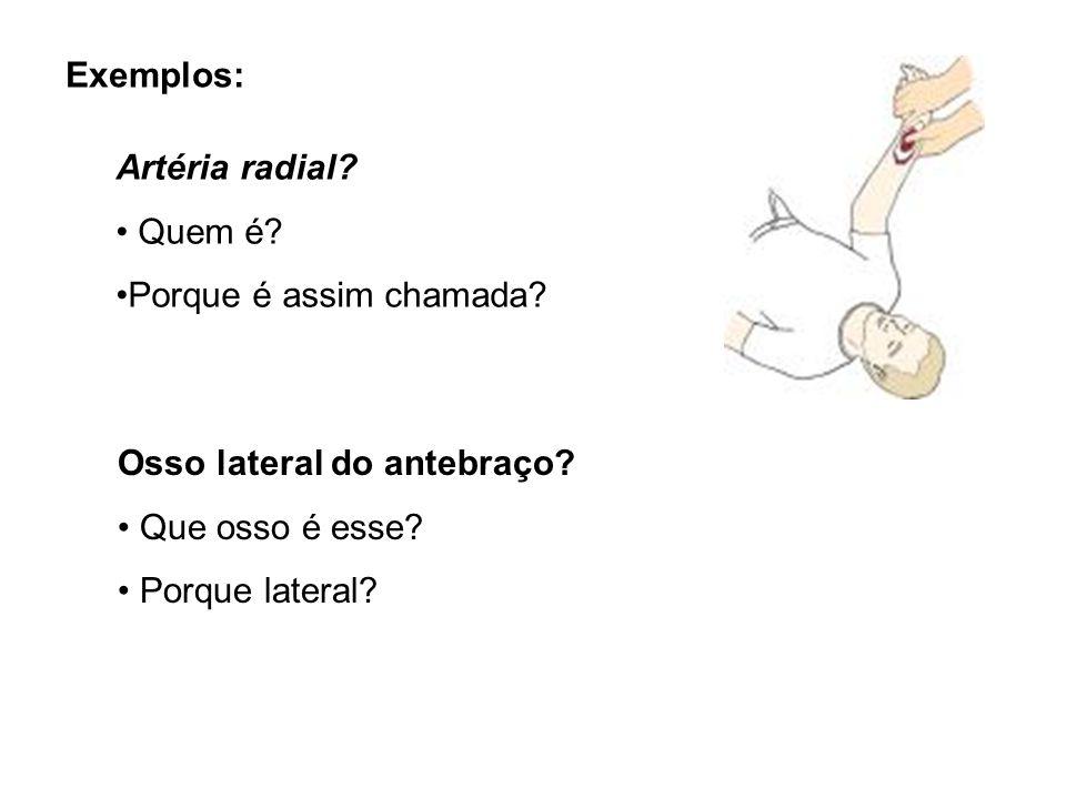 Exemplos: Artéria radial Quem é Porque é assim chamada Osso lateral do antebraço Que osso é esse
