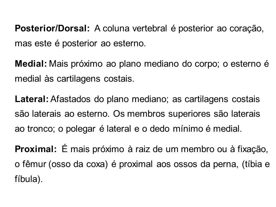 Posterior/Dorsal: A coluna vertebral é posterior ao coração, mas este é posterior ao esterno.