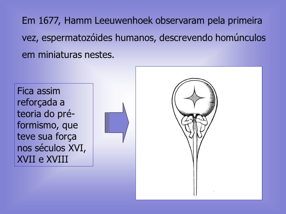 Em 1677, Hamm Leeuwenhoek observaram pela primeira vez, espermatozóides humanos, descrevendo homúnculos em miniaturas nestes.