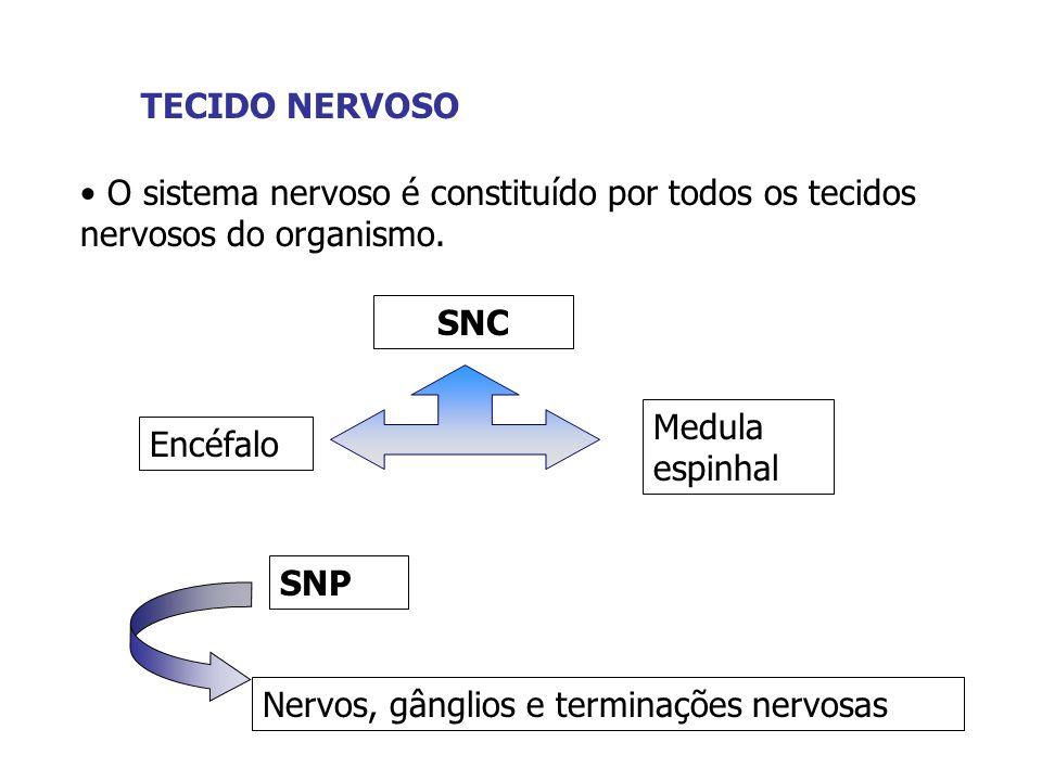 TECIDO NERVOSOO sistema nervoso é constituído por todos os tecidos nervosos do organismo. SNC. Medula espinhal.