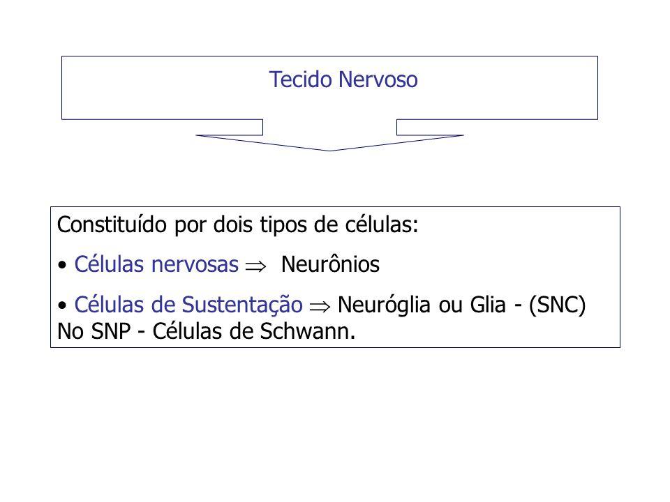 Tecido Nervoso Constituído por dois tipos de células: Células nervosas  Neurônios.