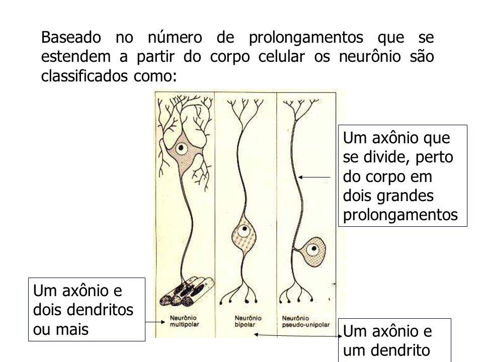 Baseado no número de prolongamentos que se estendem a partir do corpo celular os neurônio são classificados como: