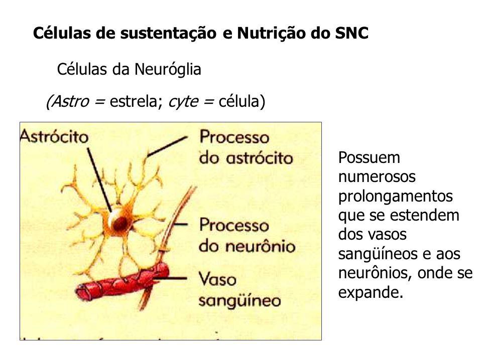 Células de sustentação e Nutrição do SNC