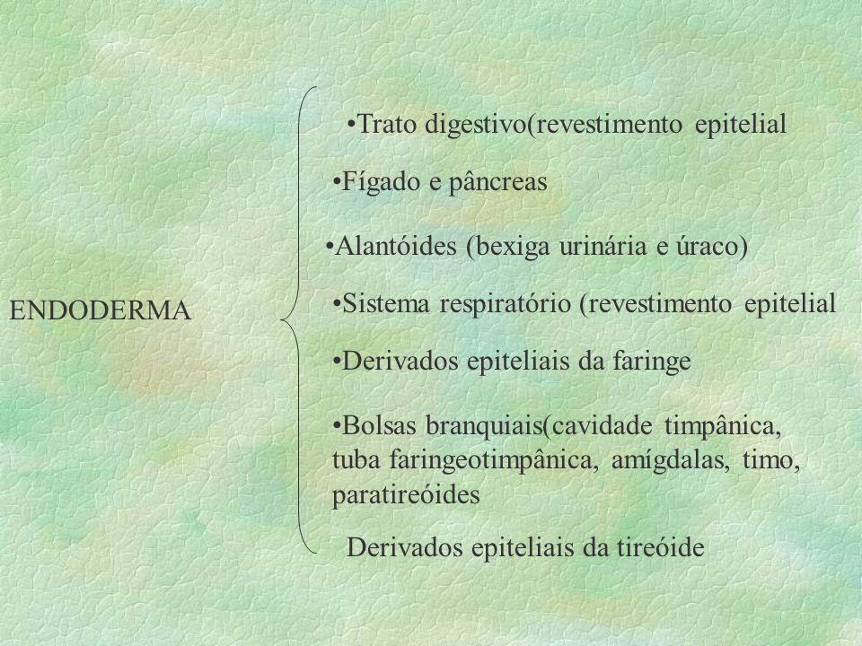 Trato digestivo(revestimento epitelial