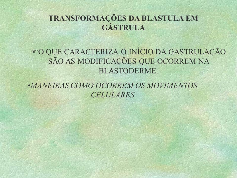 TRANSFORMAÇÕES DA BLÁSTULA EM GÁSTRULA