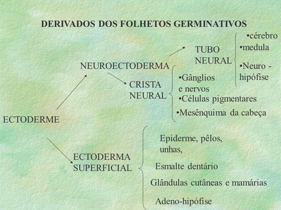 DERIVADOS DOS FOLHETOS GERMINATIVOS