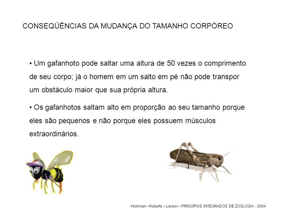 CONSEQÜÊNCIAS DA MUDANÇA DO TAMANHO CORPÓREO