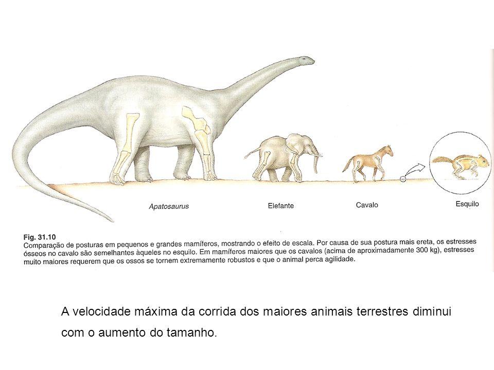 A velocidade máxima da corrida dos maiores animais terrestres diminui com o aumento do tamanho.