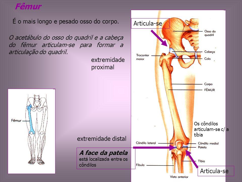 Fêmur É o mais longo e pesado osso do corpo. Articula-se