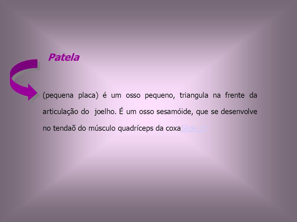 Patela