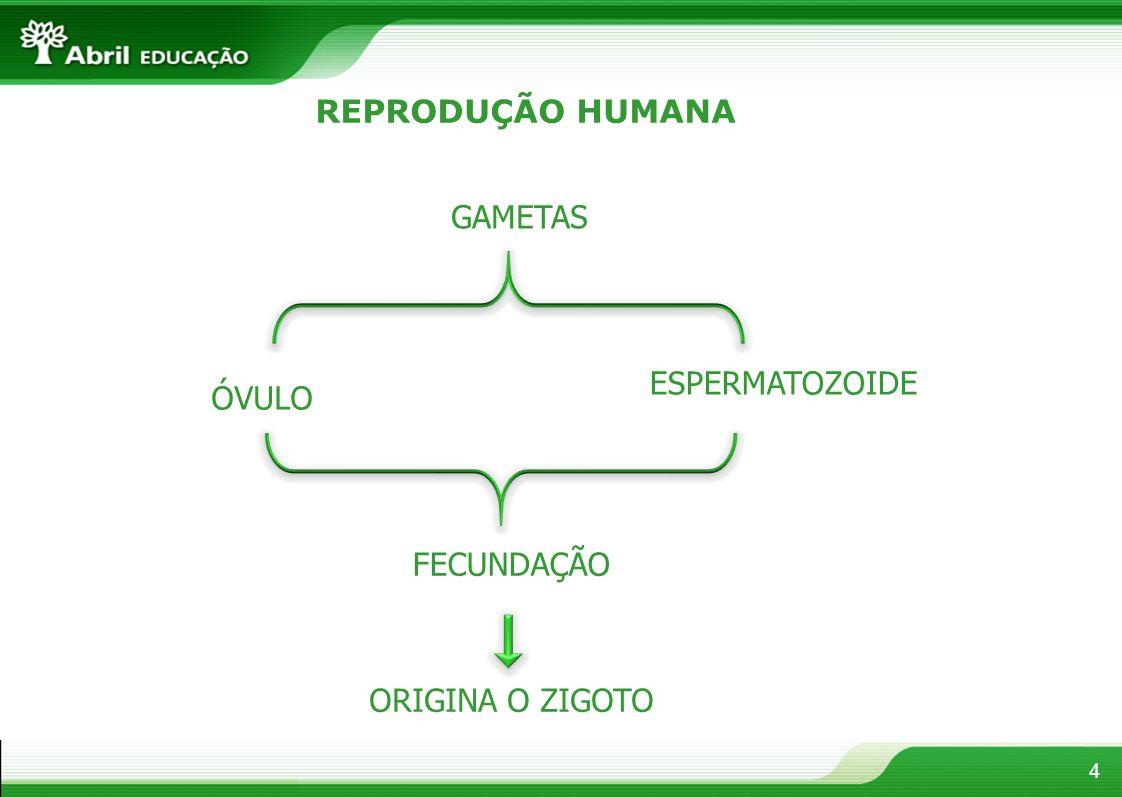 REPRODUÇÃO HUMANA GAMETAS ESPERMATOZOIDE ÓVULO FECUNDAÇÃO ORIGINA O ZIGOTO