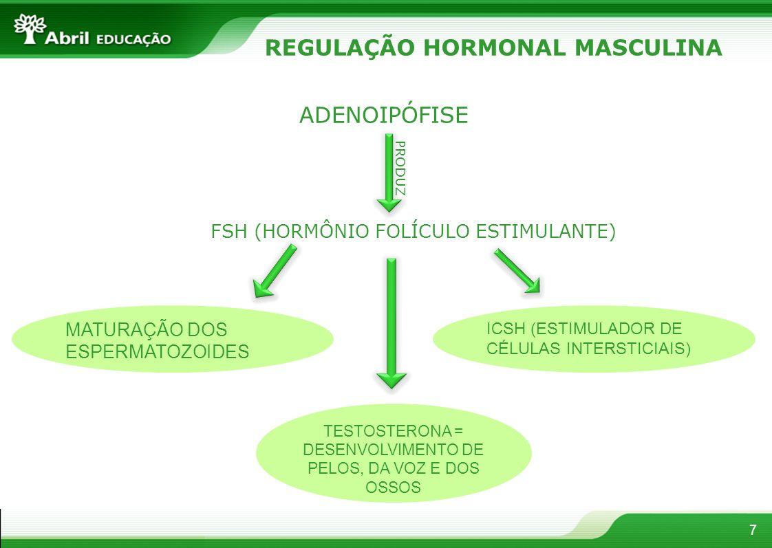 REGULAÇÃO HORMONAL MASCULINA